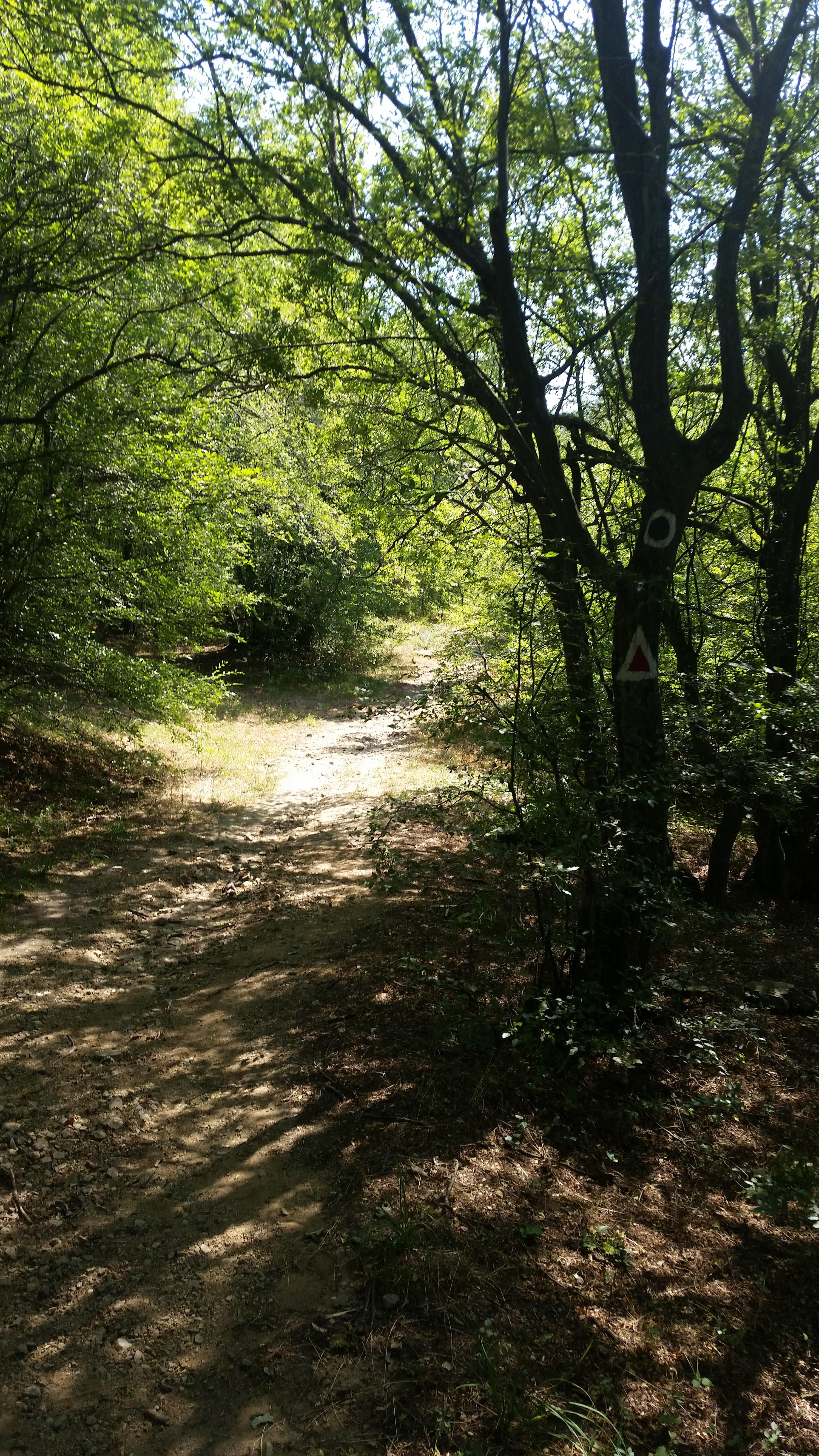 Pe Dealul cu Drum din Muntii Macin